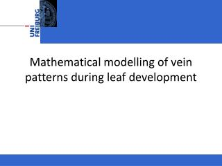 Mathematical modelling  of  vein patterns during leaf development