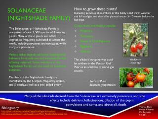 Solanaceae (Nightshade family)
