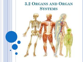 3.2 Organs and Organ Systems