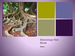 Etymology Unit Roots