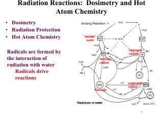 Radiation Reactions:   Dosimetry  and Hot Atom Chemistry