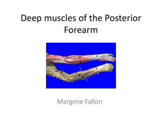 Deep muscles of the Posterior Forearm