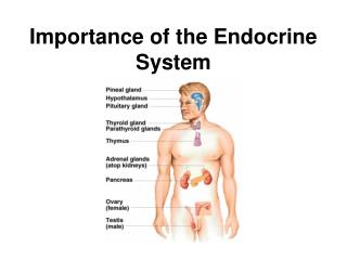 Endocrine gland              2       1.  nervous  system      2.  endocrine system