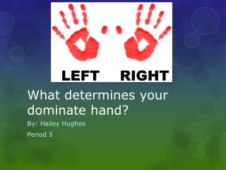 What determines your dominate hand?