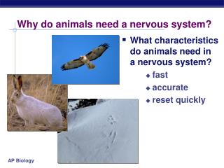 Why do animals need a nervous system?