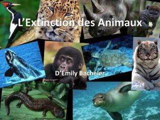 L'Extinction des Animaux