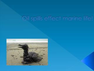 Oil spills effect marine life!