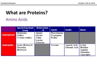 What are Proteins? Amino Acids
