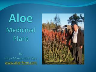 Aloe Medicinal Plant by Haya Marcovitch Slor www.aloe-farm.com