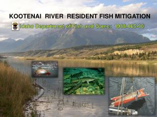 KOOTENAI  RIVER   RESIDENT FISH MITIGATION
