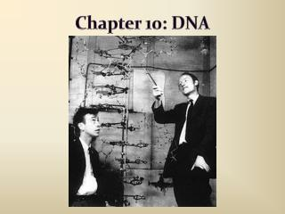 Chapter 10: DNA