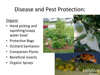 Disease and Pest Protection:
