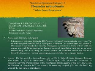 """Number of Species in Category: 3 Pleurotus nebrodensis """" White Ferula Mushroom """""""