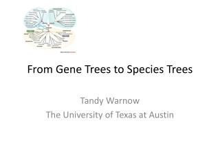From Gene Trees to Species Trees