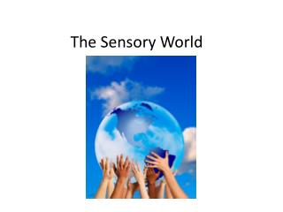 The Sensory World