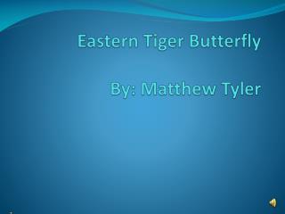 Eastern Tiger Butterfly By: Matthew Tyler