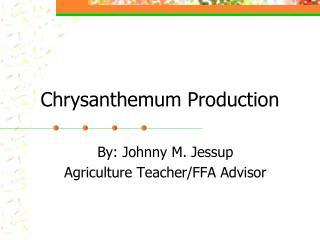 Chrysanthemum Production