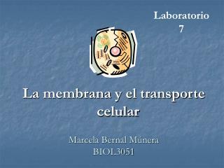 Marcela Bernal M nera BIOL3051