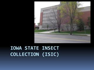 Iowa State Insect Collection (ISIC)