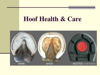 Hoof Health & Care
