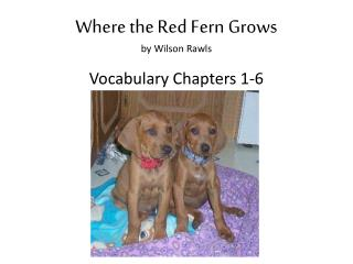 Where the Red Fern Grows by Wilson Rawls Vocabulary Chapters 1-6