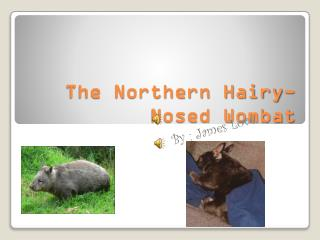 The Northern Hairy-Nosed Wombat
