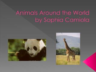 Animals Around the World by Sophia  C amiola