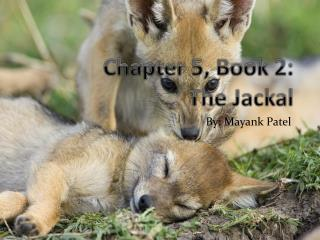 Chapter 5, Book 2:  The Jackal