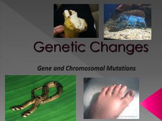 Genetic Changes