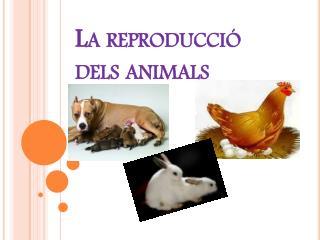 La  reproducció dels animals