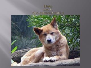 Dingo Kira F. Mrs.  Cotttrell -Grade 3