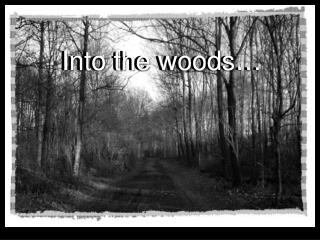 Into the woods…