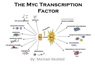 The Myc Transcription Factor