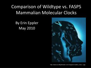 Comparison of  Wildtype  vs. FASPS Mammalian Molecular Clocks