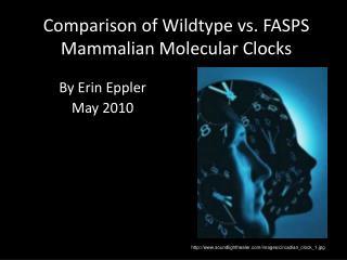 Comparison of  Wildtype  vs. FASPS Mammalian Molecular Clocks