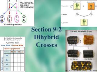 Section 9-2  Dihybrid  Crosses