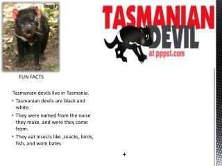 FUN FACTS  Tasmanian devils live in Tasmania. Tasmanian devils are black and white.