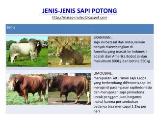 JENIS-JENIS SAPI POTONG http:// margo-mulyo.blogspot.com