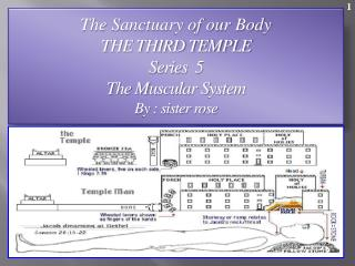 The Sanctuary of our Body THE THIRD TEMPLE Series  5   The Muscular System  By : sister rose