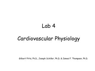 Lab 4:  Cardiovascular Physiology