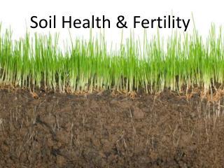 Soil Health & Fertility