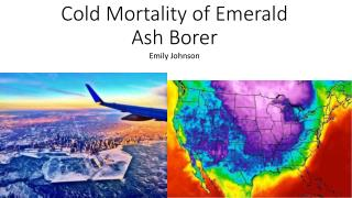 Cold Mortality of Emerald Ash Borer