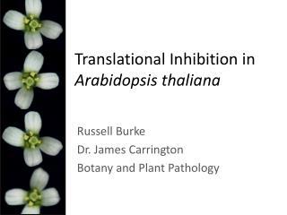 Translational Inhibition in  Arabidopsis thaliana