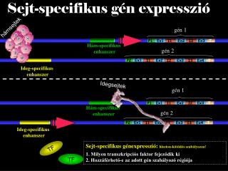 gén 2