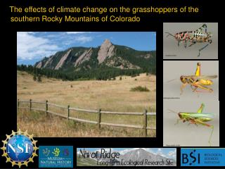 The  effects of climate change on the grasshoppers  of the