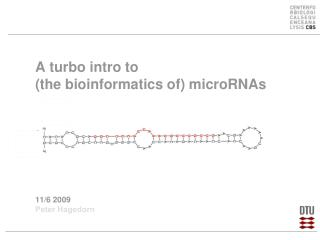 A turbo intro to  (the bioinformatics of)  microRNAs 11/6 2009 Peter Hagedorn