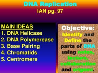 DNA Replication IAN pg. 97