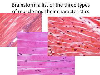 Brainstorm a list of the three types of muscle and their characteristics