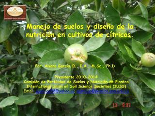 Manejo de suelos y diseño de la nutrición en cultivos de cítricos.