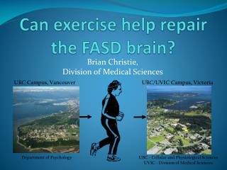 Can exercise help repair the FASD brain?